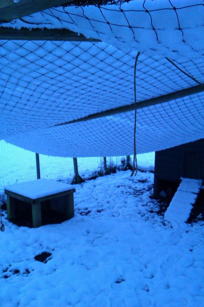 Snow on chicken run netting