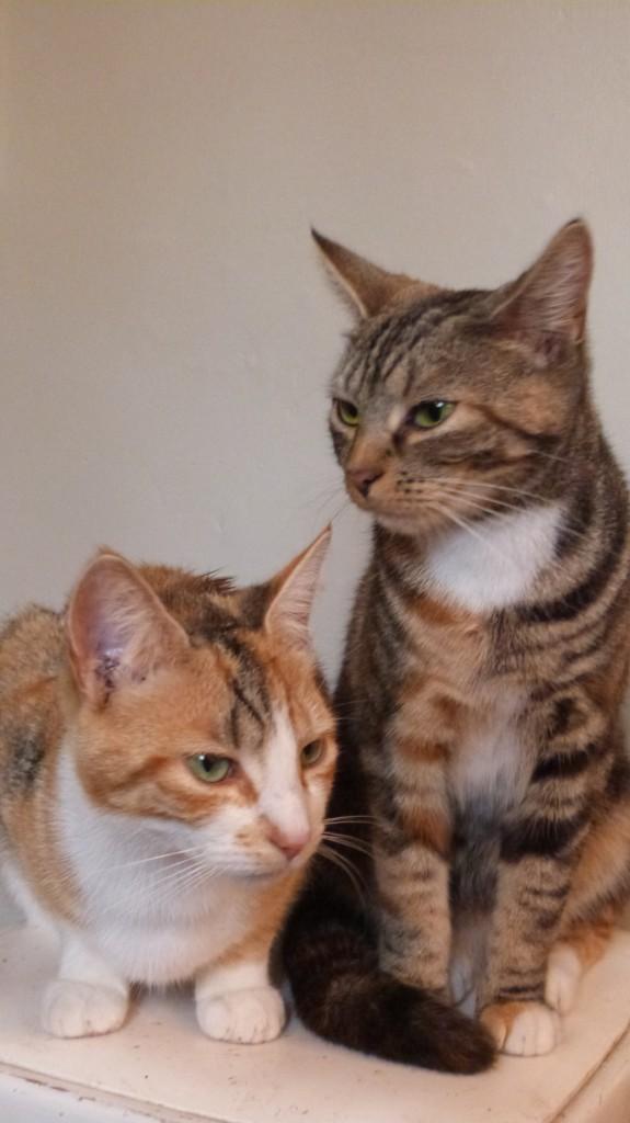 Maisie and Minnie