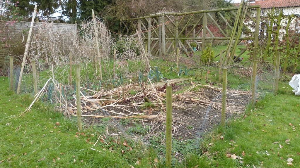 My overgrown veg patch