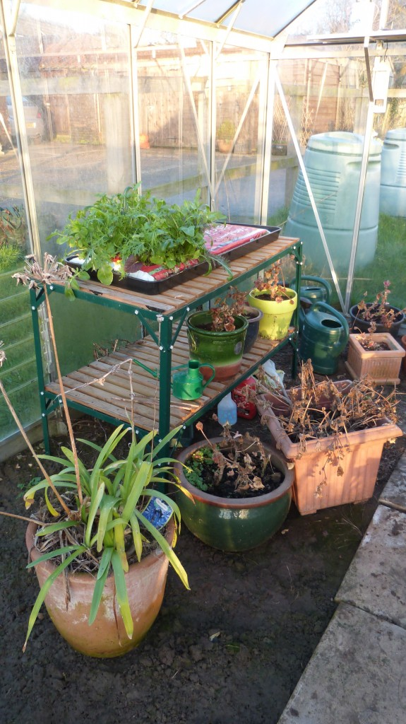 Cluttered greenhouse