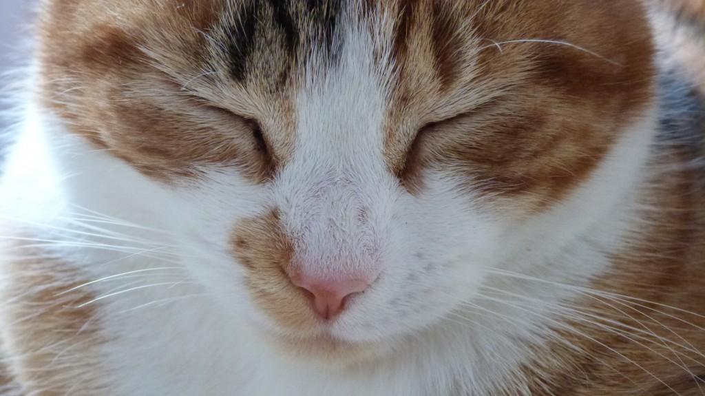 close up Maisie