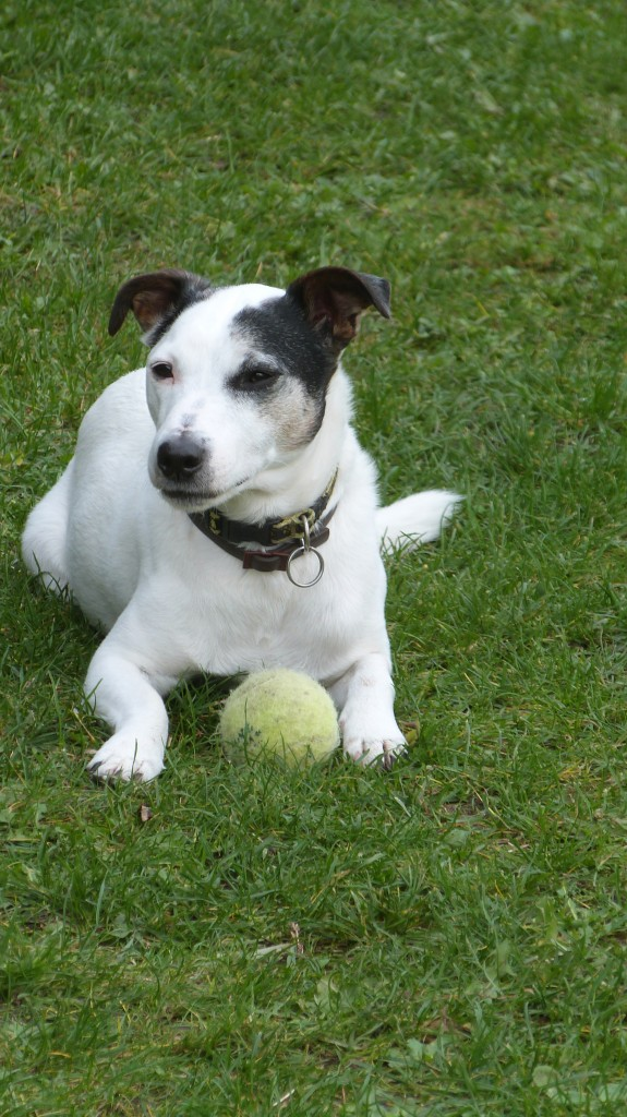 Alfie with his ball